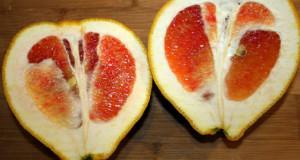 Valentine pummelo: A tasty new citrus