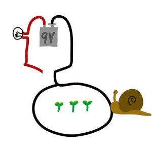 (figure 6) snail unbothered by the one wire