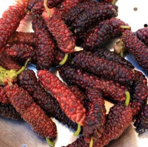 A Handful of ready to eat Pakistan Mulberries