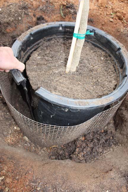 Best planting technique: 7 important steps