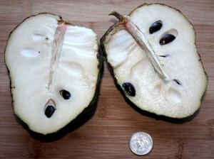 A cut atemoya fruit showing the white flesh and black seeds