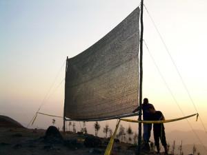 Fog harvesting mesh.