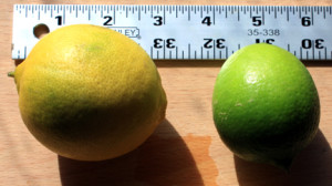 Bearss lime size