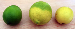 Bearss lime stages of ripeness