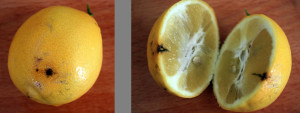 Black hole in the Meyer Lemon