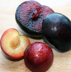 sweet treat pluerry vs burgundy plum