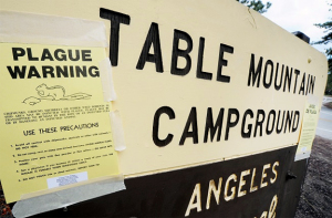 "From the recent San Jose Mercury News article: ""Plague-infested squirrel closes campgrounds"" http://www.mercurynews.com/bay-area-living/ci_23738526/plague-infested-squirrel-prompts-angeles-national-forest-campground Photo credit: Walt Mancini."