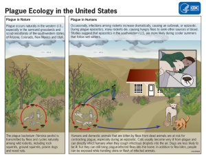 Plague lifecycle in the US. via the CDC