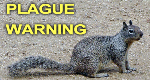Squirrels and The Bubonic Plague