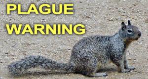 Squirrels and The Bubonic Plague