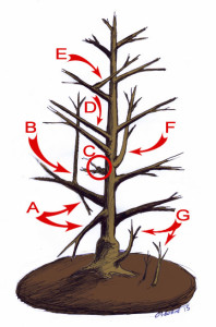 What branches to prune