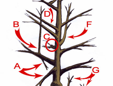 Tree Pruning Techniques Tastylandscapetastylandscape