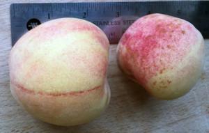 Tropic Snow Peach size