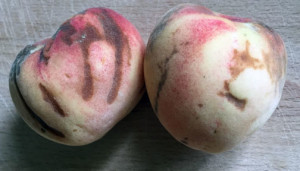 Water marks on ripe Tropic Snow Peaches