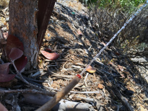 Maintaining a drip irrigation system