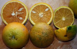 Variegated Valencia Orange appearance