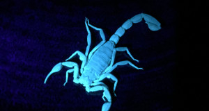 Scorpion Home Defense