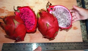 Varieties of Dragon Fruit