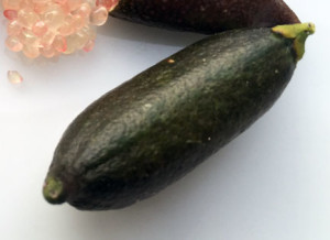 FInger limes may loook a bit like small Zucchini
