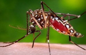 Stop mosquitoes in your garden